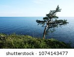 pine tree inclined by the wind. ... | Shutterstock . vector #1074143477