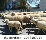 sheeps  in the city | Shutterstock . vector #1074187799