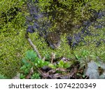 frogs in the swamp during the... | Shutterstock . vector #1074220349