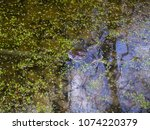 frogs in the swamp during the... | Shutterstock . vector #1074220379