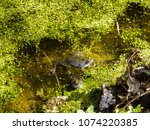 frogs in the swamp during the... | Shutterstock . vector #1074220385