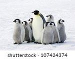 emperor penguin with children ... | Shutterstock . vector #107424374