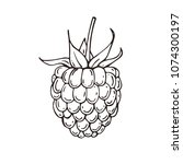 hand drawn raspberries icon.... | Shutterstock .eps vector #1074300197
