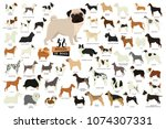 58 breeds of dogs isolated... | Shutterstock .eps vector #1074307331