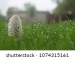 Strange Mushroom. Dew On The...