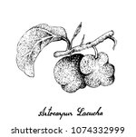 fresh fruits  illustration of... | Shutterstock .eps vector #1074332999