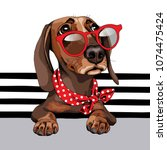 Stock vector dachshund dog in a red sunglasses and with a polka dots neck scarf on a striped background vector 1074475424