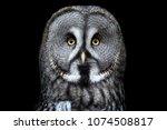 great grey owl  strix nebulosa  ... | Shutterstock . vector #1074508817