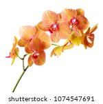 single twig of orchid isolated...   Shutterstock . vector #1074547691