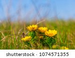 beautiful closeup spring...   Shutterstock . vector #1074571355