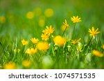 closeup beautiful spring...   Shutterstock . vector #1074571535