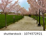 this walking path lined with... | Shutterstock . vector #1074572921
