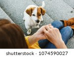 Stock photo young beautiful woman feeding her sweet dogs playfuly in a lovely park of the center of madrid 1074590027