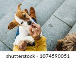Stock photo young beautiful woman feeding her sweet dogs playfuly in a lovely park of the center of madrid 1074590051