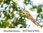 dragon lizard  animal in the... | Shutterstock . vector #1074621941