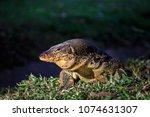 golden sunlight shining on big... | Shutterstock . vector #1074631307