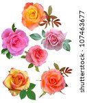 Stock photo set roses flowers it is isolated 107463677