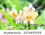 natural orchid flower | Shutterstock . vector #1074655559