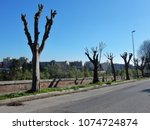 benevento   newly planted trees ... | Shutterstock . vector #1074724874