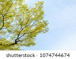tree branch leaf on blue sky... | Shutterstock . vector #1074744674