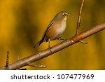 orange river white eye bird   ... | Shutterstock . vector #107477969