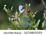 insects colony in garden   Shutterstock . vector #1074805559
