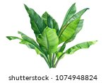 leaves of a banana of a palm... | Shutterstock . vector #1074948824