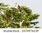 open bill stork  white egret... | Shutterstock . vector #1074976139