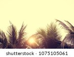 palm trees against sky  palm...   Shutterstock . vector #1075105061