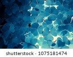 Little Blue Flowers   Nature...