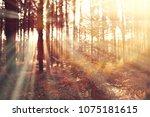 autumn landscape   sunrays in... | Shutterstock . vector #1075181615