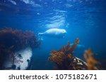 aqua animal water | Shutterstock . vector #1075182671