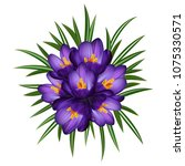 illustration of purple crocus... | Shutterstock .eps vector #1075330571