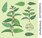 collection of nettle  plant ... | Shutterstock .eps vector #1075359074