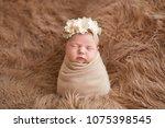 sleeping newborn girl in flower ... | Shutterstock . vector #1075398545