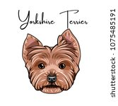 yorkshire terrier portrait. dog ... | Shutterstock .eps vector #1075485191