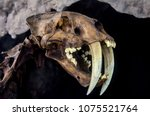 fossil of an ice age feline | Shutterstock . vector #1075521764