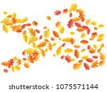 oak and maple leaf cool... | Shutterstock .eps vector #1075571144