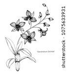 orchid flower drawing... | Shutterstock .eps vector #1075633931
