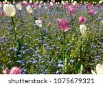 colorful meadow of flowers | Shutterstock . vector #1075679321