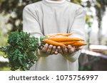 organic vegetables. healthy...   Shutterstock . vector #1075756997