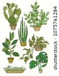 illustration of houseplants ... | Shutterstock .eps vector #1075761284