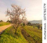 beautiful landscape  banyoles ... | Shutterstock . vector #1075782779