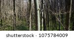 evening forest march landscape. ... | Shutterstock . vector #1075784009