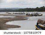 usumacinta river mexico   19... | Shutterstock . vector #1075810979