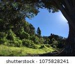 sky sunlight beach trees | Shutterstock . vector #1075828241