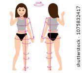female body from front and back ... | Shutterstock .eps vector #1075832417