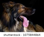 alsatian animal breeds dog... | Shutterstock . vector #1075844864