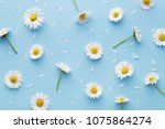 Stock photo daisy pattern flat lay spring and summer chamomile flowers on a blue background repetition 1075864274