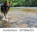 alsatian animal breeds dog... | Shutterstock . vector #1075866221
